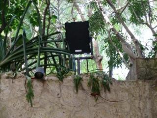 A Noho closeup in the Jaguar exhibit