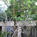 Natural fauna conceals the Noho
