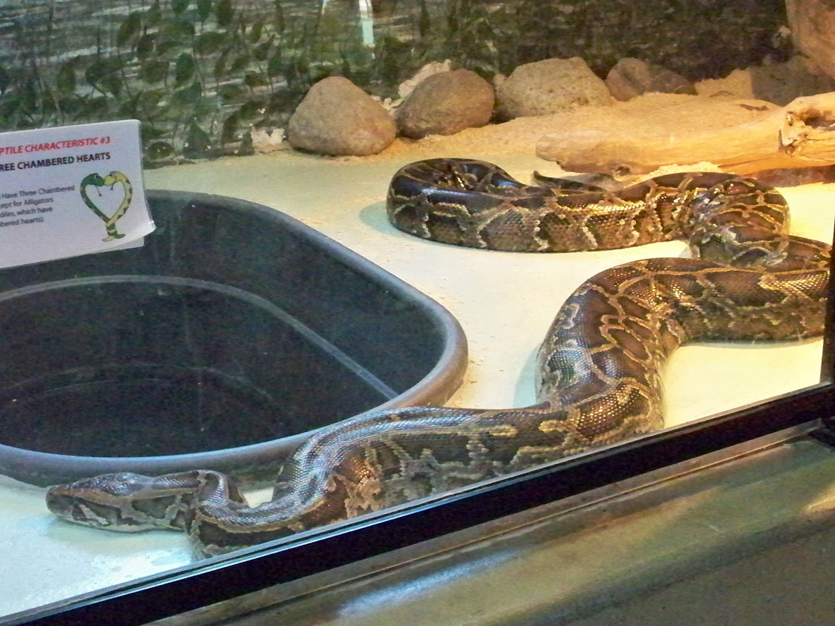 The pythons live in The Reptile House, with Vernals on the outside