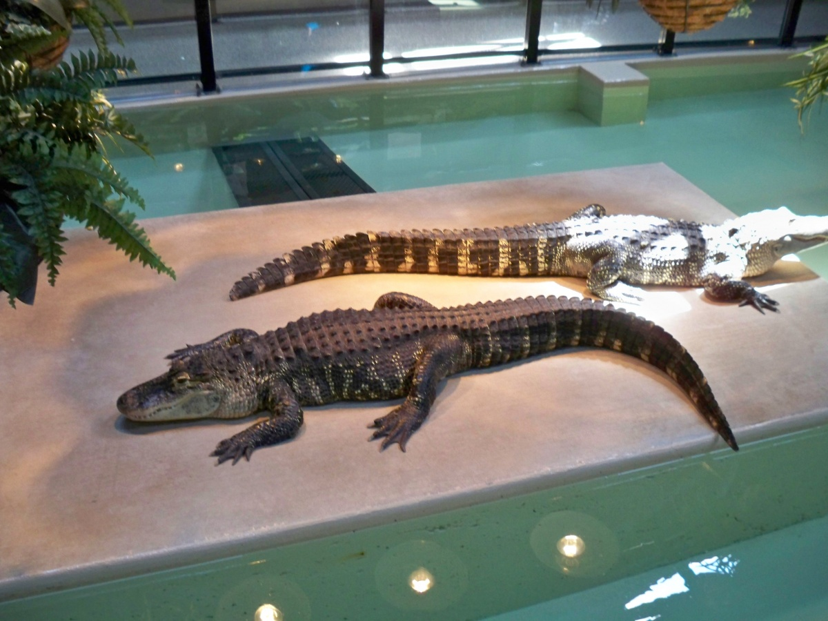 The alligators live in The Reptile House, with Vernals on the outside